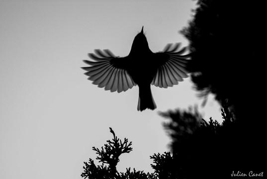 Le saut de l'ange