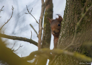 Le chêne et l'écureuil