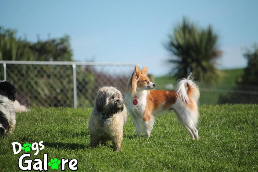 Making Sense of Dog Daycare Services