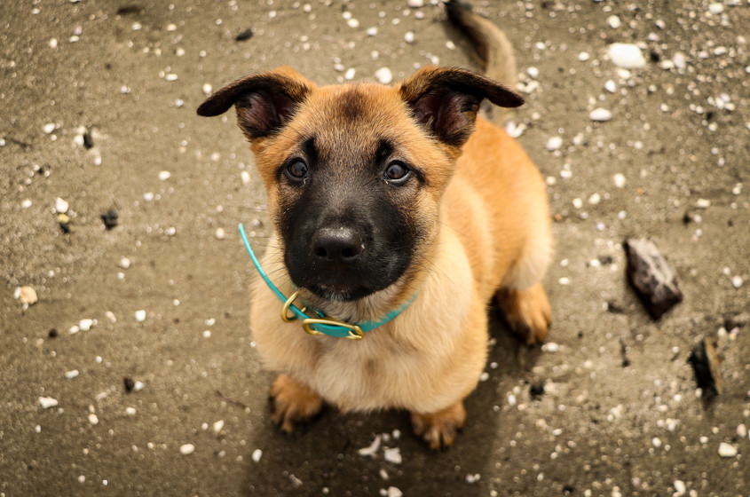 Being an advocate for your dog- the power of saying NO