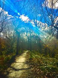 hawksworth woods.jpg
