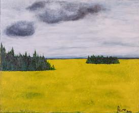 Canola fields, Valley View Alberta