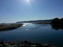 Cowichan Estuary