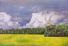 Canola field, Valleyview Alberta