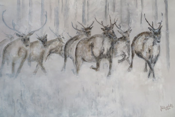 Woodland Caribou on the move.jpg