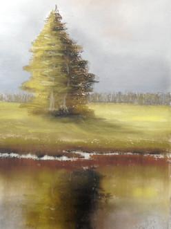 Lonesome spruce, Murnauer Moos
