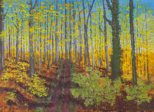 Beach Forest in fall, Odenwald