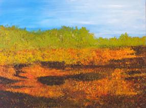 Cowichan Estuary salt marsh