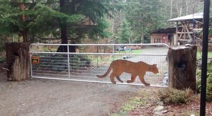 IStalking cougar
