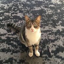 Kedi.jpeg
