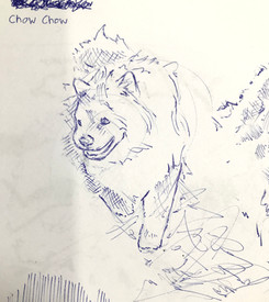 Chow Chow Sketch