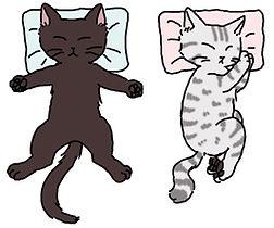 合う枕、合わない枕