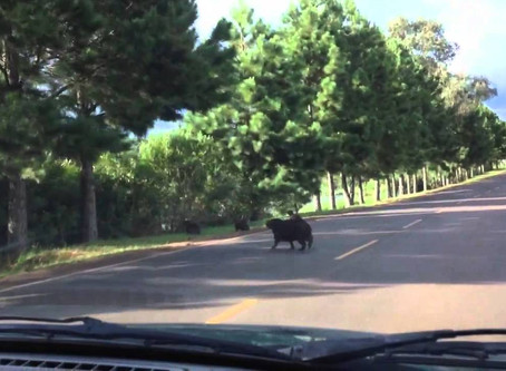 Concessionária deve indenizar motorista que teve carro atingido por animal em rodovia