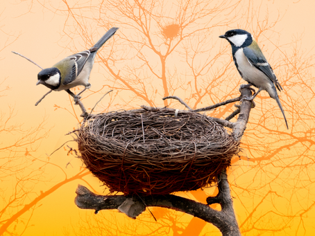 BIRDNESTING – A essência da guarda alternada dos filhos