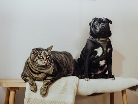 Como fica a tutela dos animais de estimação no divórcio?
