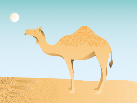 What camels can teach us about gratitude!!!