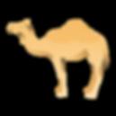 yoginis-camel.png