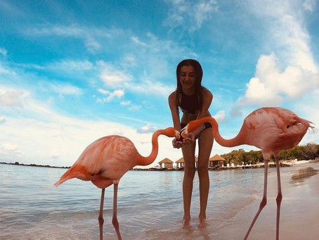 Aruba the Island of Happiness