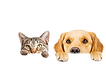 cbd-for-pets-focus-hemp-co-blog-post-fea