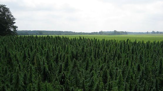 Image result for hemp field with barn