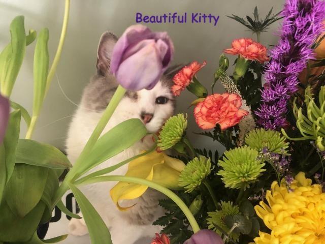 flowers_edited