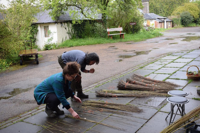 Selecting the Willow