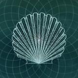 Geometry of Seashells
