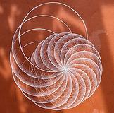 Seashell geometry