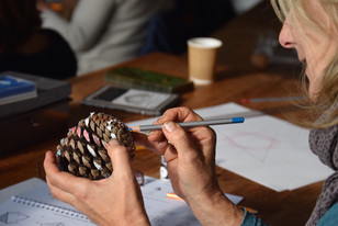 Exploring the fibonacci numbers in nature's living forms
