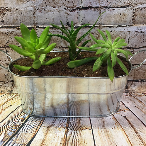 Oblong Metal Planter with Succulents