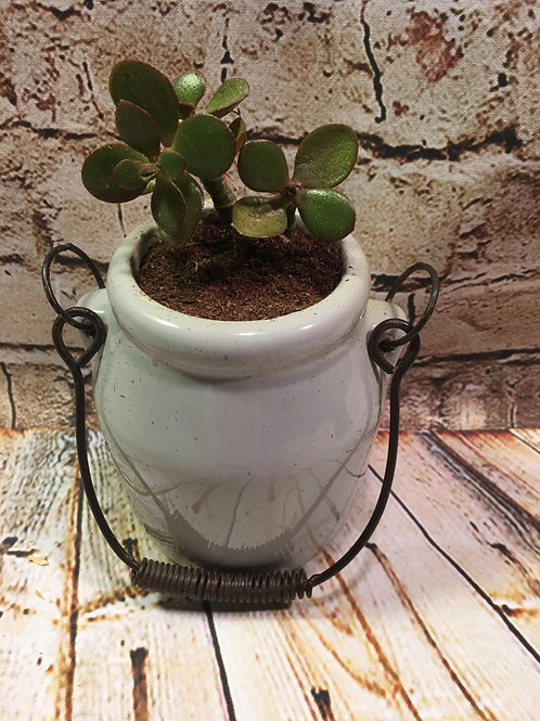 Miscellaneous Planters with Succulents