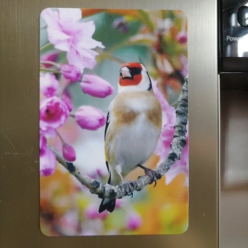 Goldfinch in blossom 6x4 fridge magnet