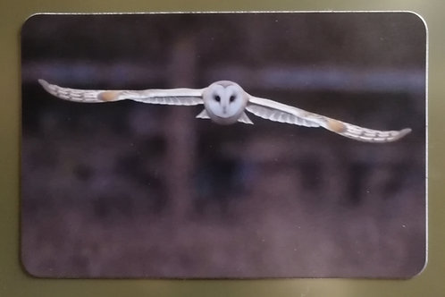 6x4 Fridge magnet - Barn Owl approach 1