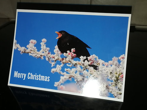 Pack of 10 Blackbird with frosty berries 7x5 Christmas card.