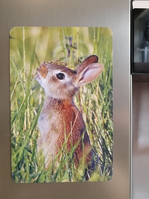 Young Rabbit - 6x4 fridge magnet