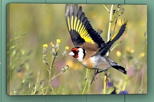 12x8 canvas print - Goldfinch in flight