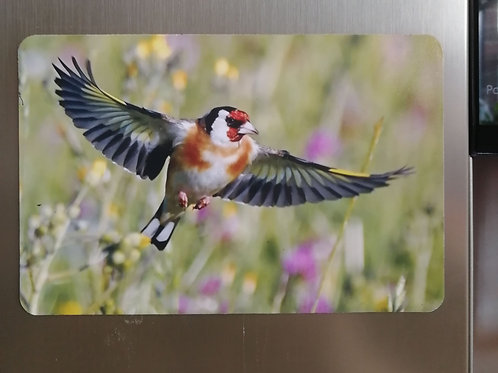 Goldfinch flying through the meadow - 6x4 fridge magnet