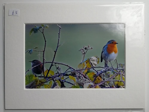 'No longer friends' Wren & Robin 6x4 mounted print