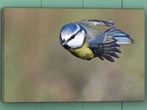 12x8 canvas print - Super Tit