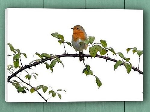 12x8 canvas print - Robin on bramble