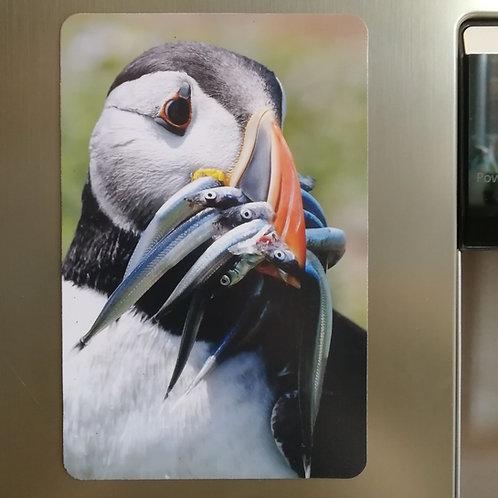 Puffin & fish portrait - 6x4 fridge magnet
