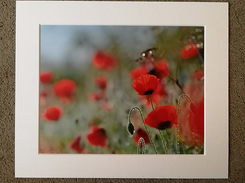 SPECIAL OFFER - 10x8 mounted print, Poppy Bokeh