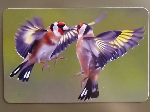 6x4 Fridge magnet - Bickering Goldfinches 2