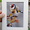 Thumbnail: Set of 4 'The Daily Goldfinch' 6x4 signed & mounted prints