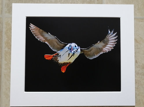 Wait for me Puffin - 10x8 mounted print