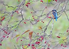 46. Kingfisher.JPG