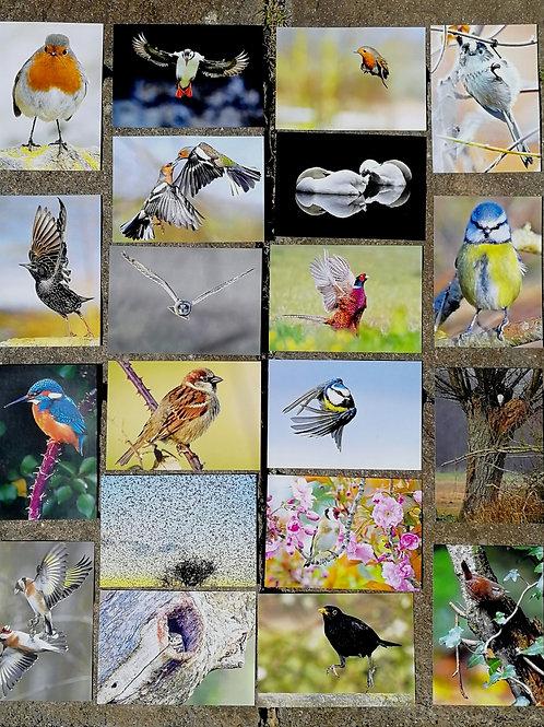 20 large 8x6 Postcards (Pack 2)