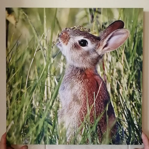 Cute young Rabbit  - 16x16 canvas print