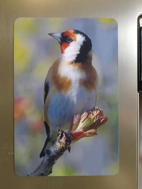 Goldfinch & Spring colours - 6x4 fridge magnet