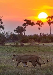 moremi-wildlife-reserve-1-2.jpg